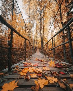 500+ Slow Living ideas in 2020 | slow living, simple living, busy life Autumn Aesthetic, Fall Photos, Autumn Leaves, Painting, Art, Autumn Photos, Art Background, Fall Season Pictures, Fall Leaves