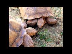 Saint-Saëns: Carnival Of The Animals - 4. Tortoises