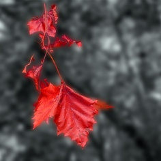 Leaf by Marty4650, via Flickr