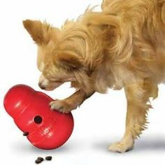 dog toy trainning Read more in http://natureandhealth.net/