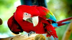 1920x1080 px red and green macaw backround: High Definition Backgrounds by Banks Allford