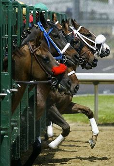 - Racing horses at the Derby Pretty Horses, Beautiful Horses, Animals Beautiful, Thoroughbred Horse, Dressage, Clydesdale, Appaloosa, Friesian, Kentucky Derby