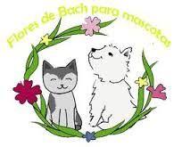 Terapia Floral para Mascotas