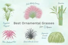 Elegant Ornamental Grasses to Grow in Any Garden Few plants compare to ornamental grasses for nonstop performance, strength, and visual impact. Here are some of the most popular grasses to grow. Ornamental Grasses For Shade, Ornamental Grass Landscape, Evergreen Landscape, Landscape Borders, Landscape Designs, Forest Landscape, Shade Perennials, Shade Plants, Cactus Plants