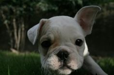 The Importance Of Breeds Of Dogs