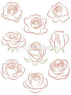 Set of roses. Vector illustration. Royalty Free Stock Vector Art Illustration