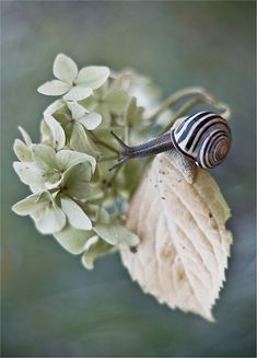 *Snail (макромир Magda Wasiczek)
