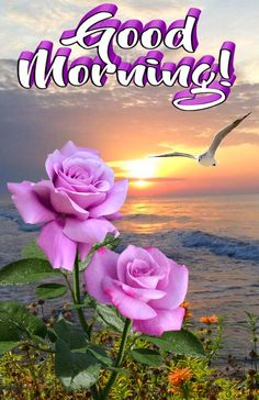 Good Morning Wishes Gif, Very Good Morning Images, Good Morning Greeting Cards, Morning Images In Hindi, Hindi Good Morning Quotes, Good Morning Images Download, Good Day Quotes, Good Morning Happy, Good Morning Picture