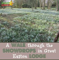 Great Easton Lodge is a great place to go with the kids to catch the Snowdrop in Spring - wonderful shots, and an amazing place to introduce the kids to photography as well.