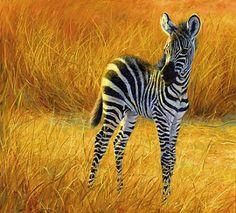 Google Image Result for http://images4.fanpop.com/image/photos/24500000/Baby-Zebra-zebras-24515070-366-331.jpg