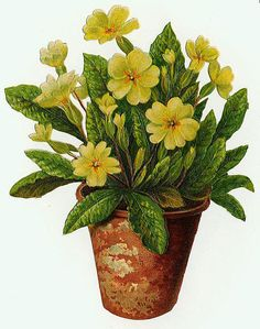 Flowers595