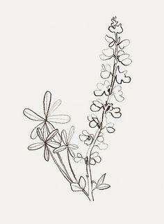 'wild lupine' by bernadette pascua