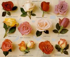 roses - Love the smell of roses