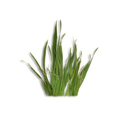 natali_design_spring11_grass1-sh.png ❤ liked on Polyvore featuring grass and greenery