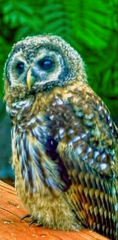 What a stunning Owl:):):)