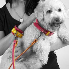 Love these wrist cuffs with matching patent leather collars & leashes!  A total hands-free dog walking system in 5 cool color combinations...