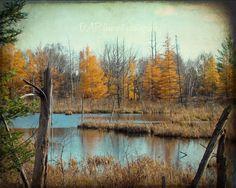 Fall Forest Landcape - digital download