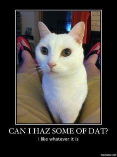 Can I haz some of dat? This is my cat; Casper. He was always ready for a treat! I sure miss his love and cuddles!