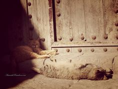 P1010919_Essaouira