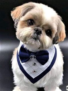 "Obtain great tips on ""shih Tzu dogs"". They are on call for you on our web site. Shitzu Puppies, Cute Dogs And Puppies, Doggies, Dog Haircuts, Shih Tzu Puppy, Shih Tzus, Dog Clothes Patterns, Dog Dresses, Dog Bandana"