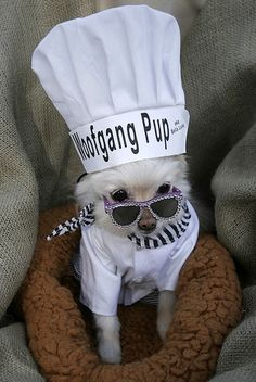 25 Creative Dog Costumes - Some of these are AMAZING!