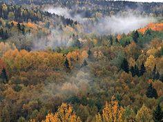 The colourful autumn hiking season (ruska) in Nuuksio National Park. Photo: Hannu Holmberg