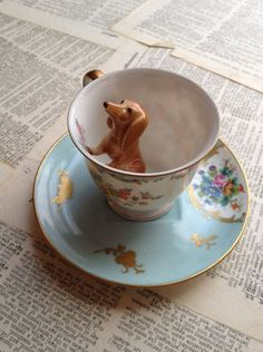 Doxie in my coffee *.*