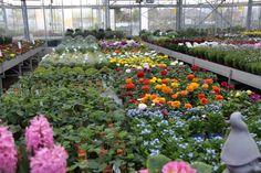 Grote diversiteit van zomerbloeiers bij tuincentrum Van Eeckhaut