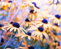flower photography floral fine art photography by mylittlepixels