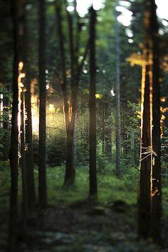 Jolie forêt.