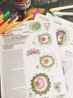 almost finished color-coding diagrams for anatomy!