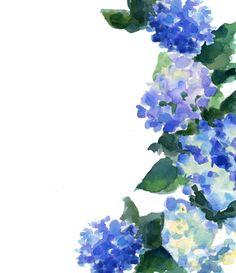 Hydrangea Scan By Tsutsuji Sakai On DeviantART