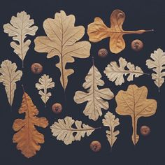 INSPIRATION: Fall art - These are amazing. I love these soft ochre and brown colors. Oak Leaves, Autumn Leaves, Pressed Leaves, Art Et Nature, Image Deco, Illustration Botanique, Creation Art, Nature Collection, Mabon
