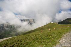 Serfaus-Fiss-Ladis - Alpen Bergpanorama - Mountains and alps - Horses - Pferde über den Wolken