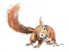 Linear & watercolor squirrel