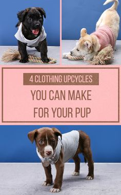 4 Ways To Recycle Clothing Into Dog Sweaters