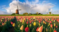Life in the Netherlands