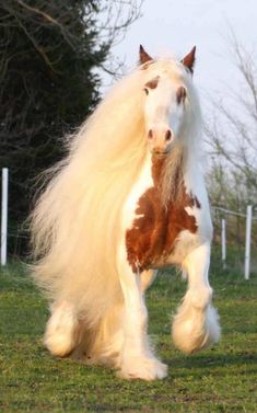 Zwierzęta Horse Photos, Horse Pictures, Funny Animal Pictures, Majestic Horse, Majestic Animals, Most Beautiful Animals, Beautiful Horses, Pretty Horses, Horse Love