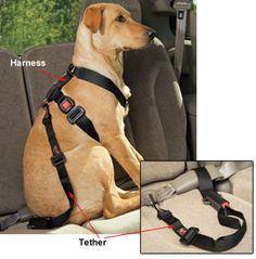 33 best dog belts images on Pinterest Dog accessories
