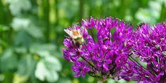 Gardens | Visit Anchorage