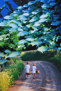 Fish Friends, John Turck Collage