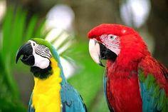 kedi , köpek , kuş hayvanlar ile bilgiler..: Papağan Eğitimi ve Konuşturulması  Papağanlara Nas...