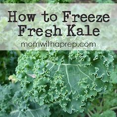How to Freeze Raw Fresh Kale for smoothies with Kale