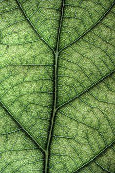 Leaf by sj9966, via Flickr