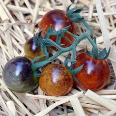 Blue Tomato Indigo Blue Berries ブルートマト・インディゴ・ブルー・ベリーズ