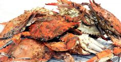 I Got Your Crabs - Freshly caught, local seafood. Full service restaurant where you can sit down at our stainless steel steam bar. Let our staff shuck your crabs for you while you enjoy a cold beverage! Steamed crabs, wide selection of shellfish, sandwiches, homemade soups. IGotYourCrabs.com,  252-449-BITE, 3809 N. Croatan Highway, Kitty Hawk, NC