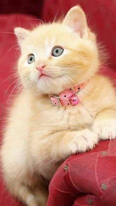 Cats and kitties.one is cuter than the next. Baby Kittens, Little Kittens, Cute Cats And Kittens, Kittens Cutest, Pretty Cats, Beautiful Cats, Cute Baby Animals, Crazy Cats, Cat Lovers