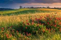 Stunning countryside with fields of red poppies and typical Tuscany stone house on the hill at colorful sunset, Pienza, Italy, Tuscany Landscape, Countryside Landscape, Spring Landscape, Landscape Photos, Italy Travel, Italy Trip, Red Poppies, Spring Flowers, Fields