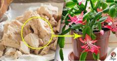 Minden növény számára fontos, hogy a virágföld tápanyagokban gazdag legyen, de főként akkor, amikor a növény...