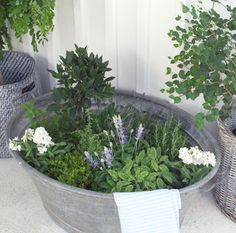 Little  herb garden in zinc wash tub.  Repinned by www.claudiadeyongdesigns.com  www.thegardenspot.co.uk